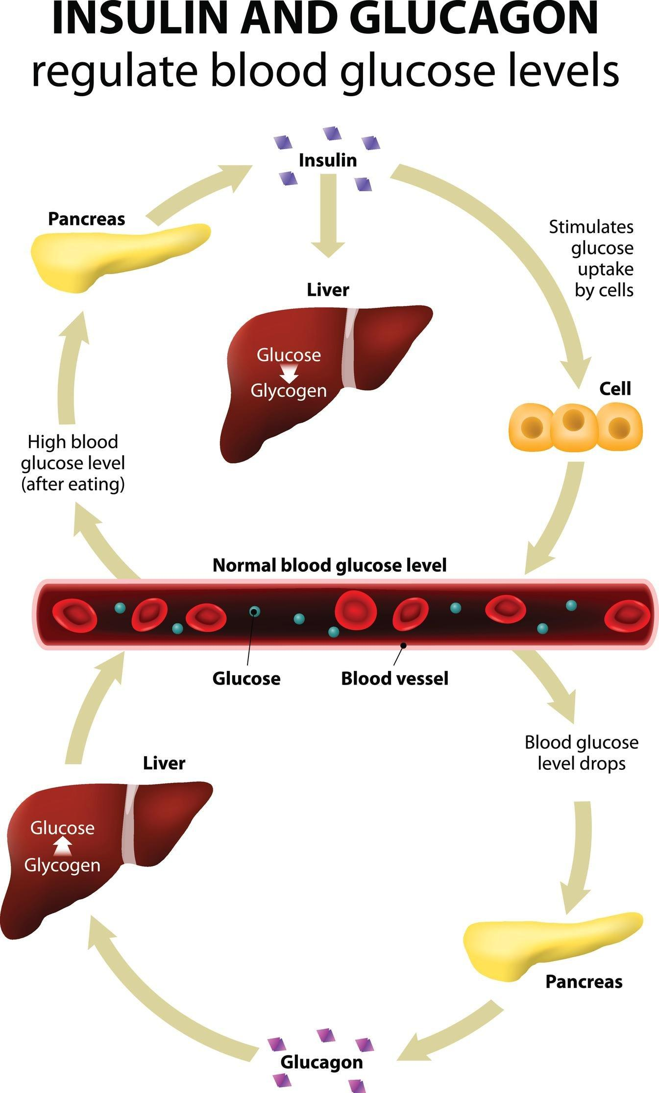 Diabetes Explained