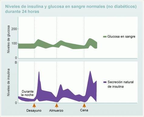 Informacin Bsica Sobre La Insulina
