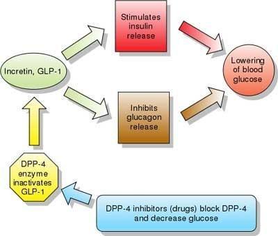 Dpp-4 Inhibitors - Dipeptidyl Peptidase-4 Inhibitor - Gliptins - Globalrph