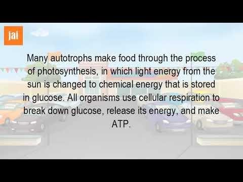 How Is Glucose Turned Into A Usable Form Of Energy Called Atp?