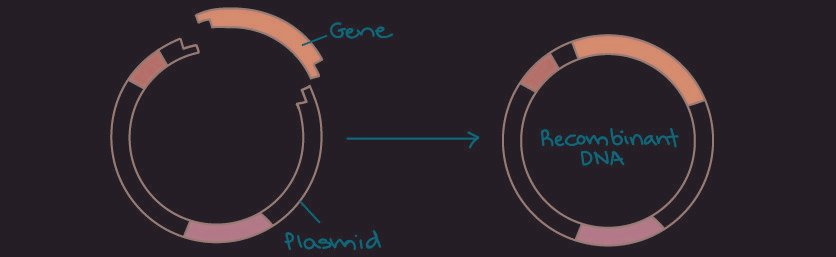 Overview: Dna Cloning