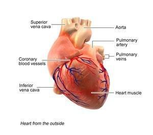 Cardiomyopathy: Symptoms