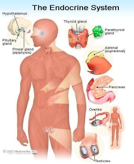 What Are The Six Body Systems That Interact With Diabetes?