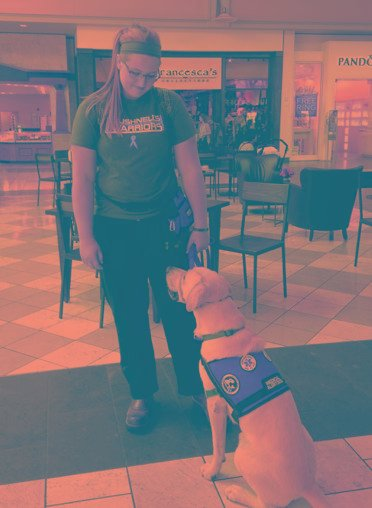 Can Diabetes Alert Dogs Really Detect Low Glucose Levels?