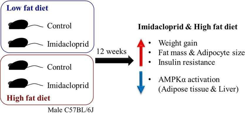 Imidacloprid Promotes High Fat Diet-induced Adiposity And Insulin Resistance In Male C57bl/6j Mice