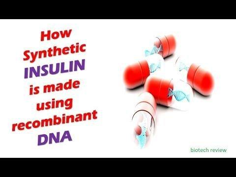 How Insulin Is Made Using Bacteria