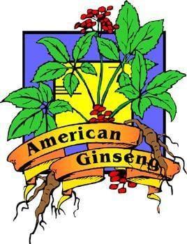 Ginseng Tea Diabetes