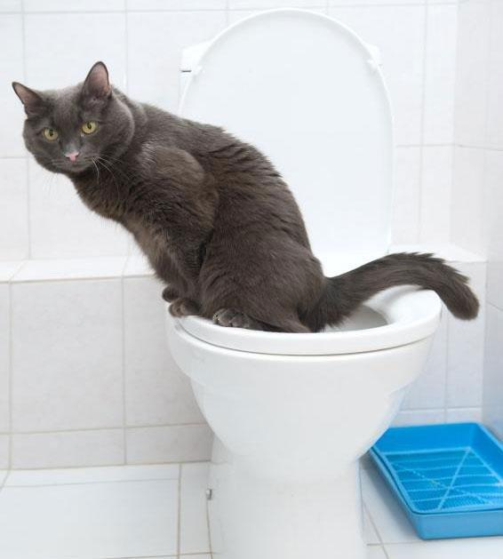 Can Diabetes Cause Frequent Urination?