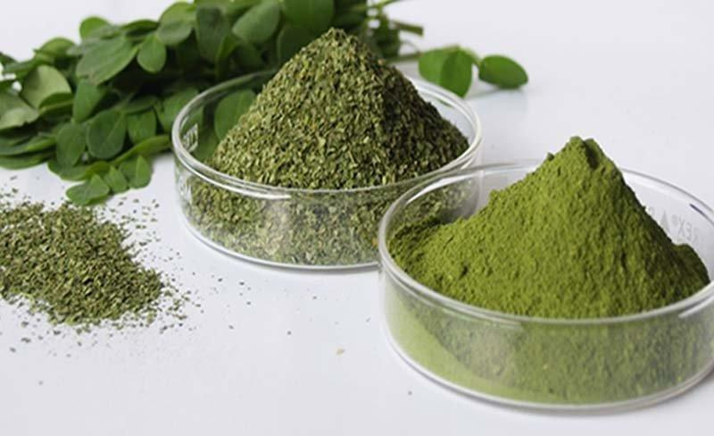 Moringa – The Herb That Treat Cancer And Stops Diabetes