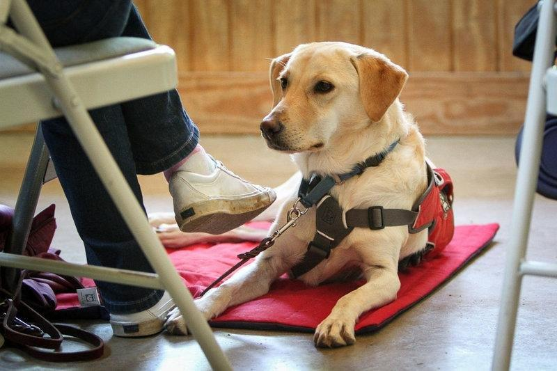 Can Diabetes Alert Dogs Help Sniff Out Low Blood Sugar?