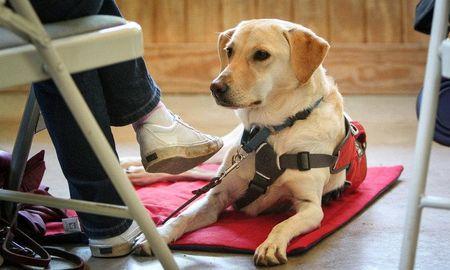 Dog Diabetes Cost