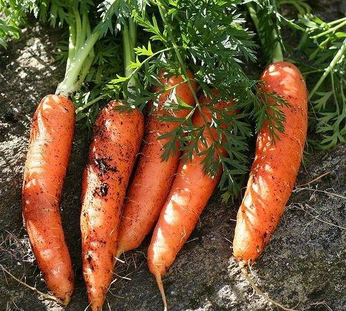 Nature/nurture Study Of Type 2 Diabetes Risk Unearths Carrots As Potential Risk Reducers