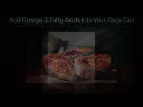 Diet Tips For A Diabetic Dog
