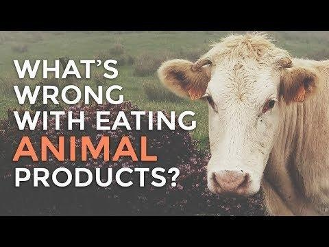Is Insulin Made From Animals?