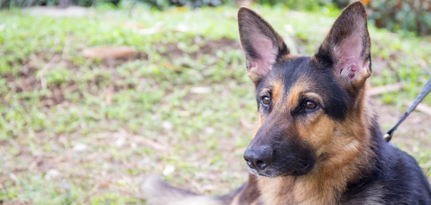 Can Dogs Live A Normal Life With Diabetes?
