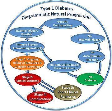 Progression Of Diabetes Type 1