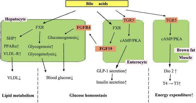 Cholecystectomy As A Risk Factor Of Metabolic Syndrome: From Epidemiologic Clues To Biochemical Mechanisms