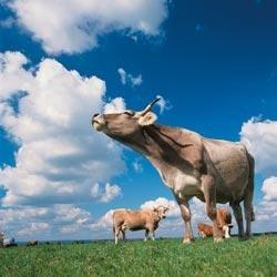 The Art Of Grazing: Diabetes Forecast