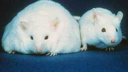 Diabetes Mellitus And Metabolic Disorders