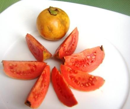 How Do We Use Guava Leaves For Lowering Blood Sugar