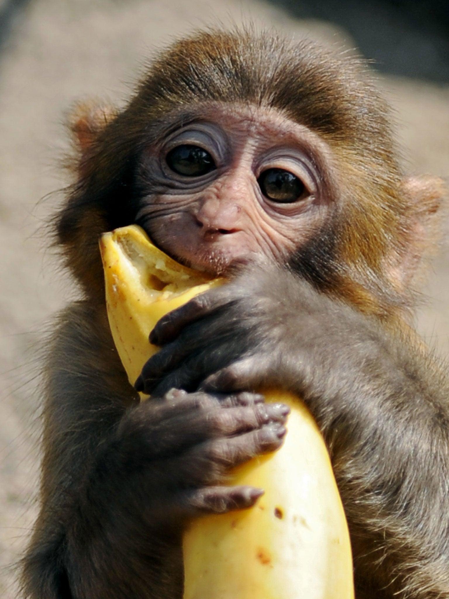 Are Bananas Good For Diabetics Uk?