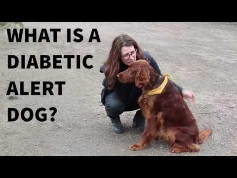 How Is Diabetes Diagnosed In Dogs