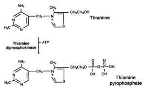 Alcoholic Ketoacidosis & Lacticacidosis