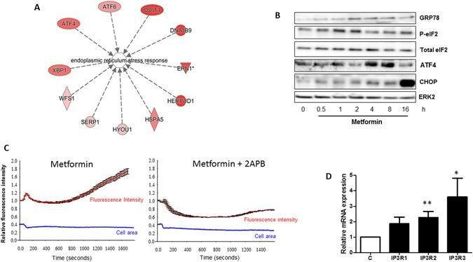 The Energy Disruptor Metformin Targets Mitochondrial Integrity Via Modification Of Calcium Flux In Cancer Cells