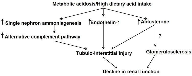 Metabolic Acidosis And The Progression Of Chronic Kidney Disease