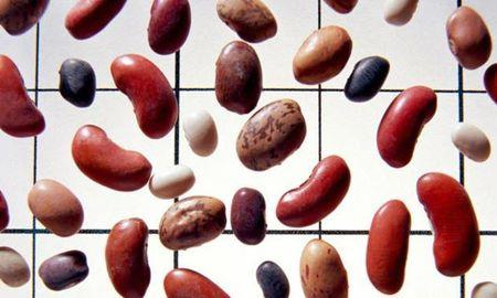 Kidney Beans Diabetes
