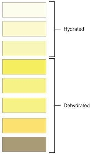 Urine Colors Chart: Meaning Of Pee Color And Smell