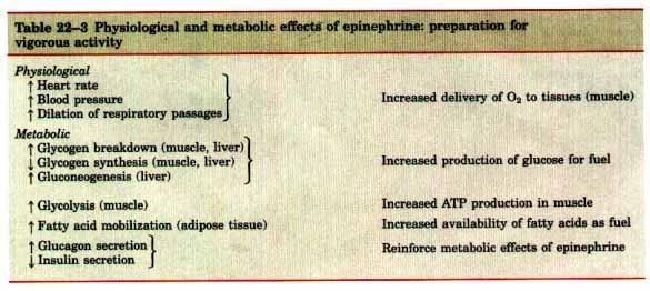Hormonal Regulation Of Fuel Metabolism