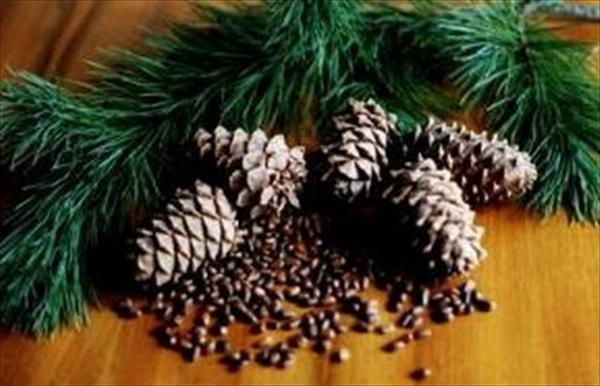 Pine Nuts In Diabetes