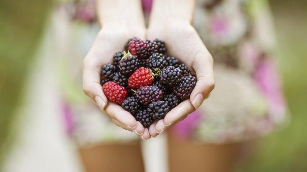 Is Fiber Good For Blood Sugar?