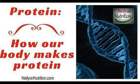 How Does The Body Makes Glucose From Protein?