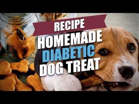 How Do You Take Care Of A Dog With Diabetes?