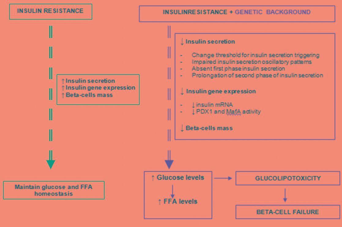 Type 2 Diabetes Beta Cells