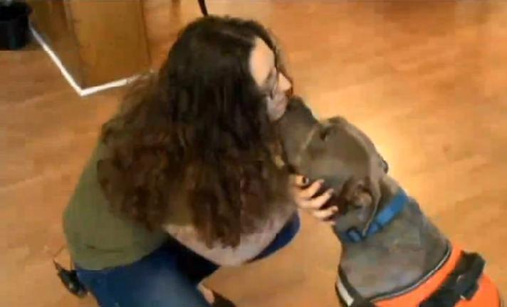 Woman Unknowingly Adopts Pit Bull Who Detects Seizures