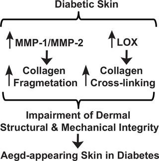 Collagen And Type 2 Diabetes