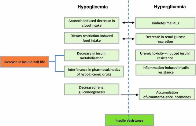 Interactions Between Kidney Disease And Diabetes: Dangerous Liaisons
