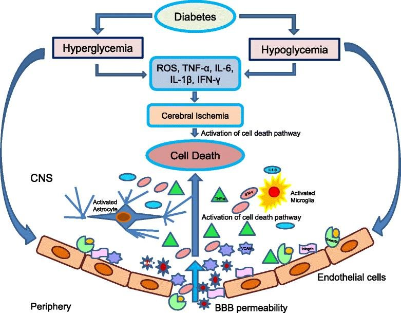 Cerebral Ischemic Damage In Diabetes: An Inflammatory Perspective