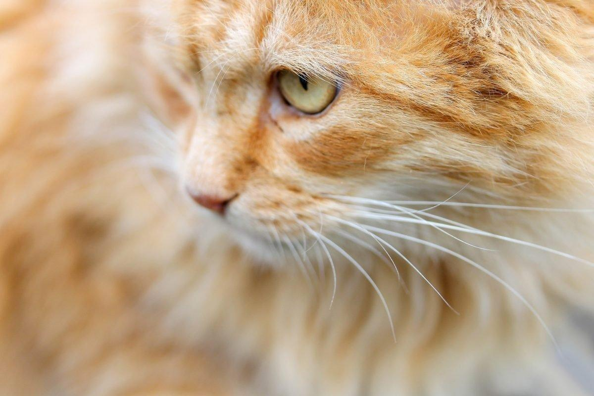 Diabetes In Cats: Causes, Symptoms, & Treatment
