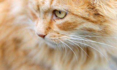 What Can Be Done For A Cat With Diabetes?