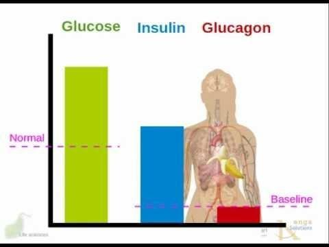 How Does Diabetes Affect The Endocrine System