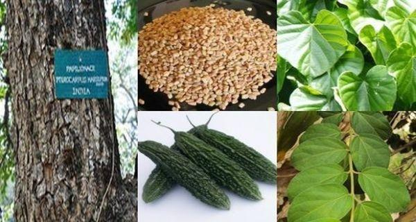 How To Use Natural Remedies To Control Diabetes Better