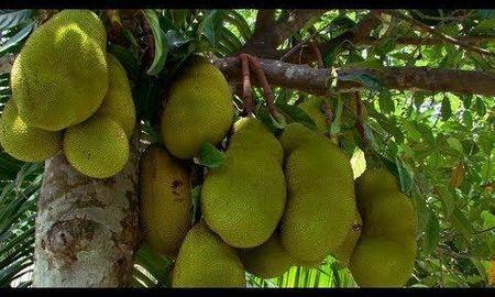 Is Avocado Good For Diabetic Patients
