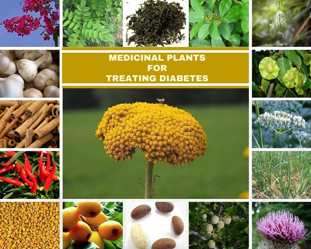 18 MEDICINAL PLANTS FOR TREATING DIABETES