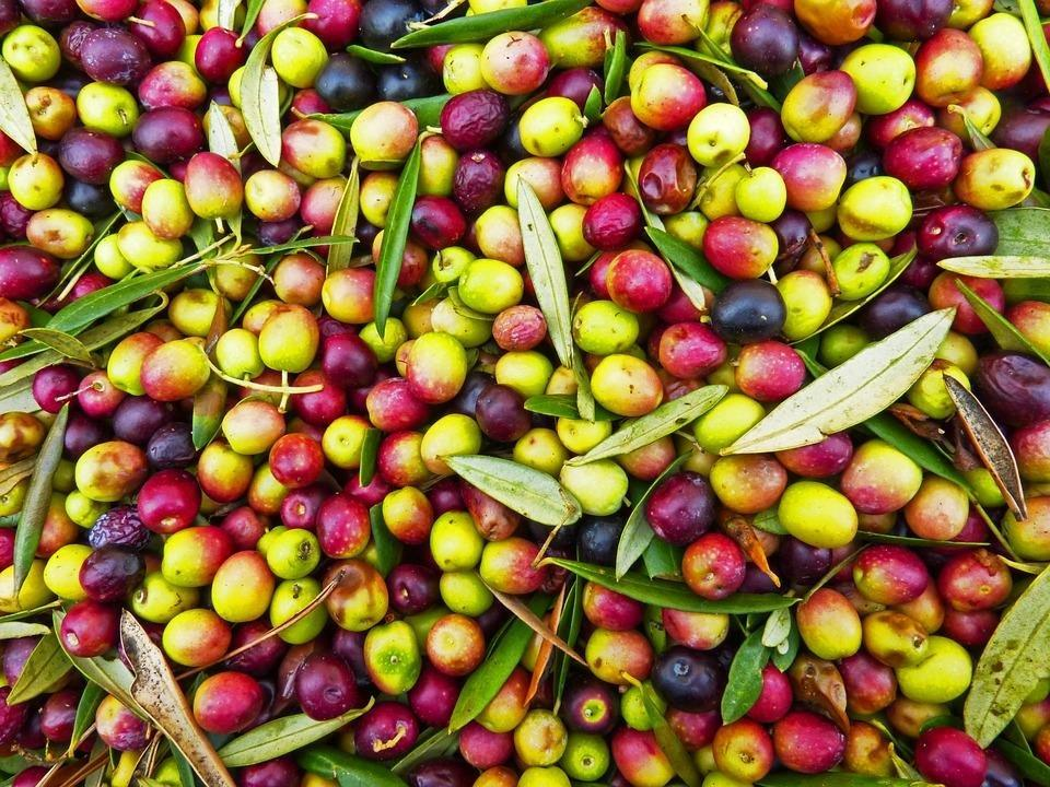 Olives: The Magical Fruit