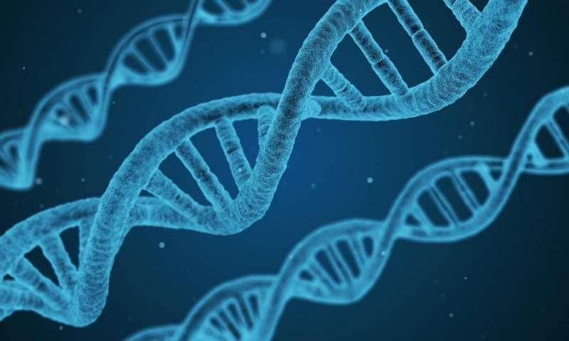 Diabetes and heart disease linked by genes, study reveals