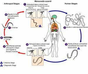 Diabetes And Periodontal Disease Ppt